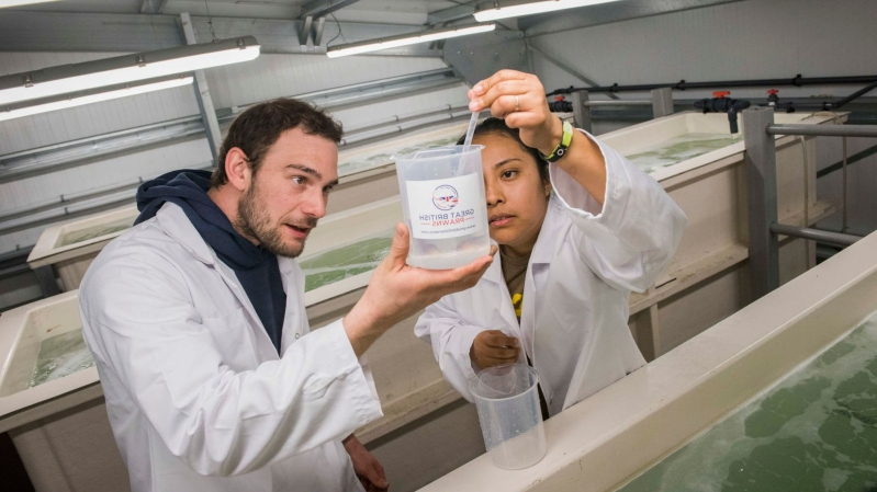 New UK farm to deliver prawns without need for freezing or air miles