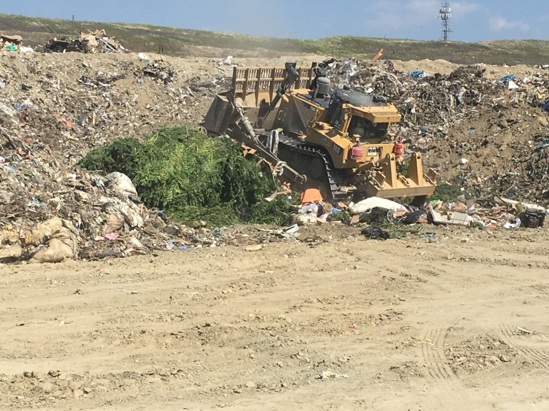 70 Tons of Weed Buried in Landfill After Seizures at Over 100 Illegal Grows in Anza Valley