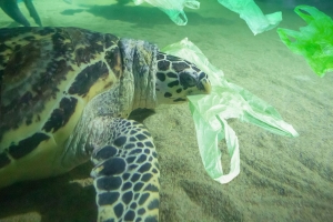 World Oceans Day: UK joins fight against plastic pollution