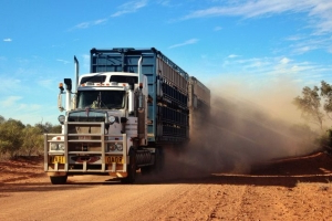 Calls for freight subsidies as 500,000 Barkly cattle trucked out in 'emergency' destocking