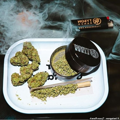 World: Hot boxing! Inside Mike Tyson's pot empire - from