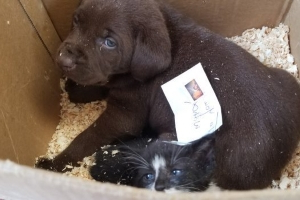Alberta woman charged after allegedly trying to mail puppies and kitten