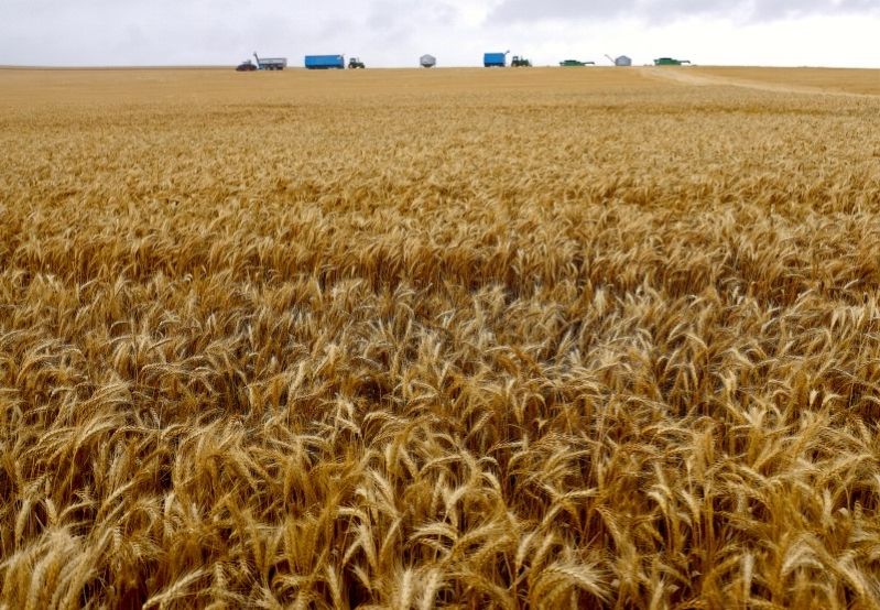 Australian wheat output under threat as dry weather set to linger