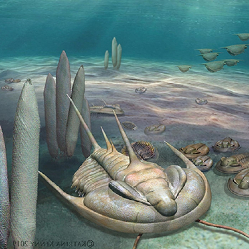 Fossils of giant new species of sea creature found on South Australia's Kangaroo Island