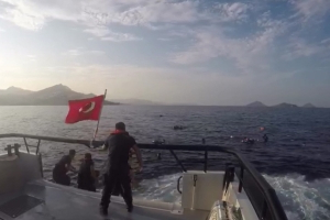 Turkey: 12 dead, 31 rescued after migrant boat sinks