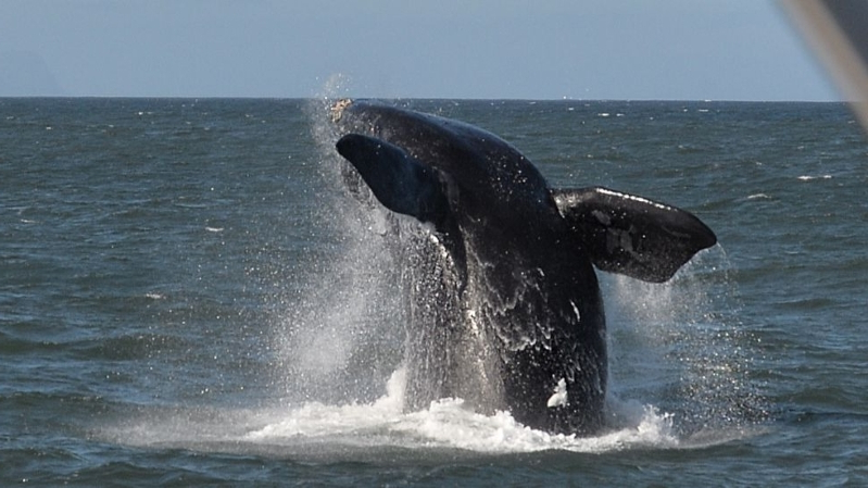 Scientists make first recording of rare whale song