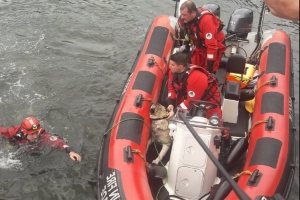Brave Dublin firefighters rescue dog and two people from the Liffey