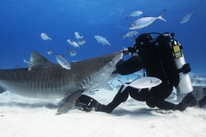 The Man Who Is Intentionally Bitten By Sharks: 'Fear Is a Funny Thing'