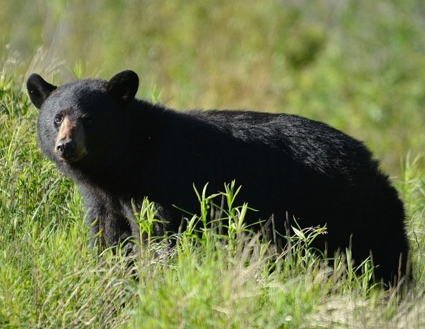 Woman chased by bear is nervous about leaving house