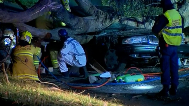 Woman dead after tree falls on her car in NSW Blue Mountains