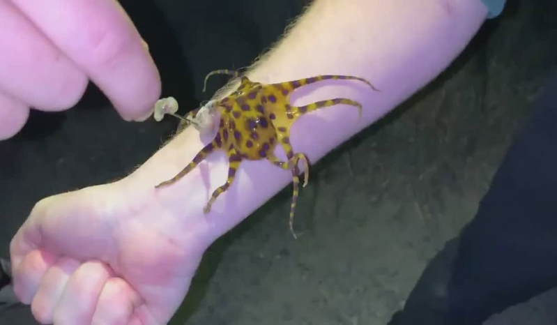 Irish man and friend place octopus with deadly venom on bare skin