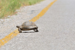 An Underpass for Turtles in Wisconsin Is Saving Dozens of the Little Guys' Lives