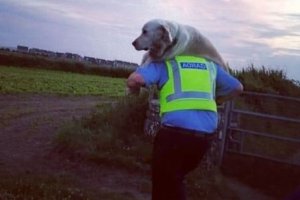 Paw Patrol: Garda carries injured dog 1km to safety after cliff fall