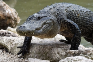 'Please Don't Flush Your Drugs M'kay.' Tennessee Police Warn of Creating 'Meth Gators'