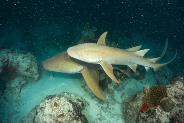 Tiny, glow-in-the-dark sharks have been discovered in the Gulf of Mexico