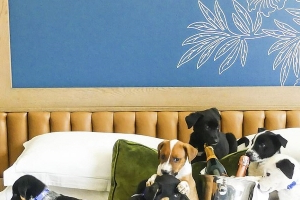 A Denver hotel will throw you a PUPPY party in your room