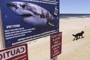 Cape Cod officials on alert amid spike in shark sightings