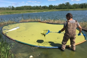How duckweed might be a solution to pollution in Lake Winnipeg