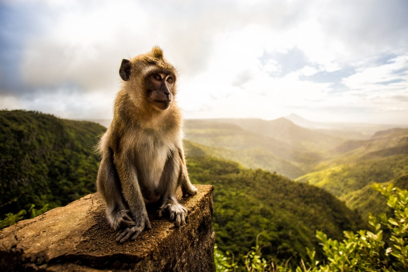 Weird News: Eco-Conscious Monkey Does Not Monkey Around With