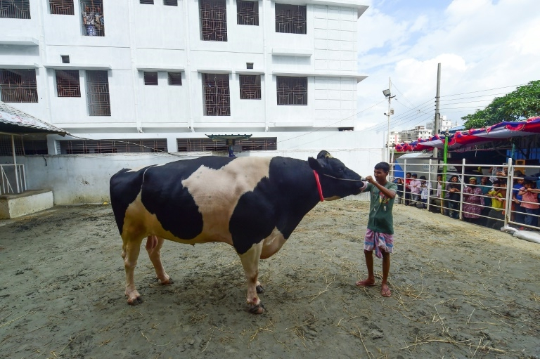 Born in the USA, 'Boss' the bull fetches record price in Bangladesh