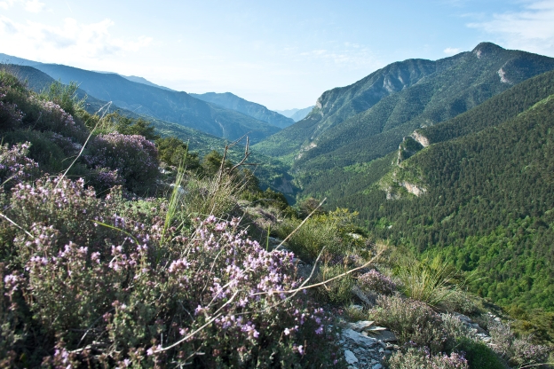 Travel: How to go wild in the French Riviera - PressFrom - Australia