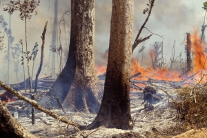 The Amazon rainforest is on fire: Cause, scope, and how you can help