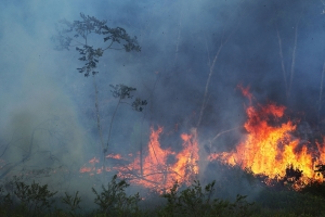 How Did the Amazon Rainforest Fires Start?