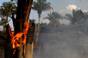 Amazon fires caused by humans, environmentalists say