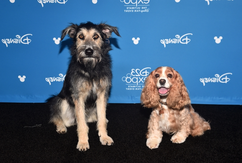 Meet Monte, the kill shelter rescue dog in Disney's 'Lady and the Tramp' live-action remake