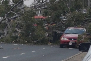 Four injured, cars damaged after tree falls on Hume Highway