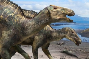 Newly Discovered Japanese Duck-Billed Dinosaur Was a Cretaceous Beach Bum