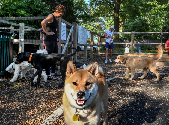 A controversial dog park that divided Chevy Chase will be dismantled
