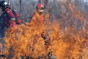 Bolivian forest fires destroy two million hectares