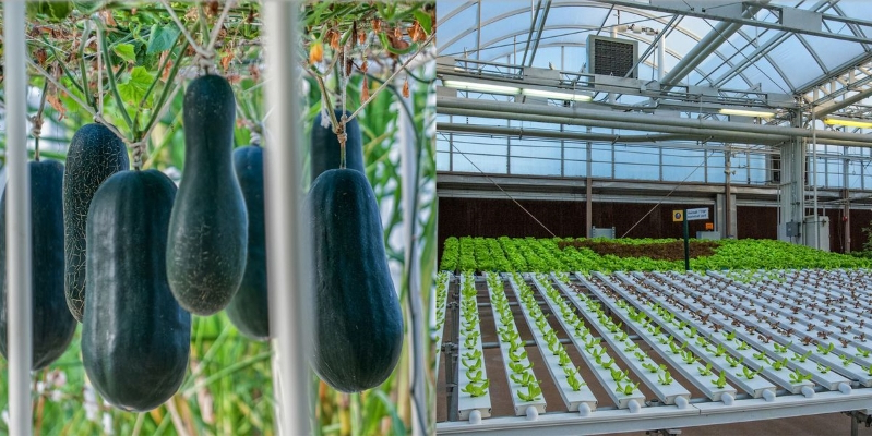 Disney World Has A Secret Greenhouse That Grows Mickey-Shaped Pumpkins And Massive Lemons