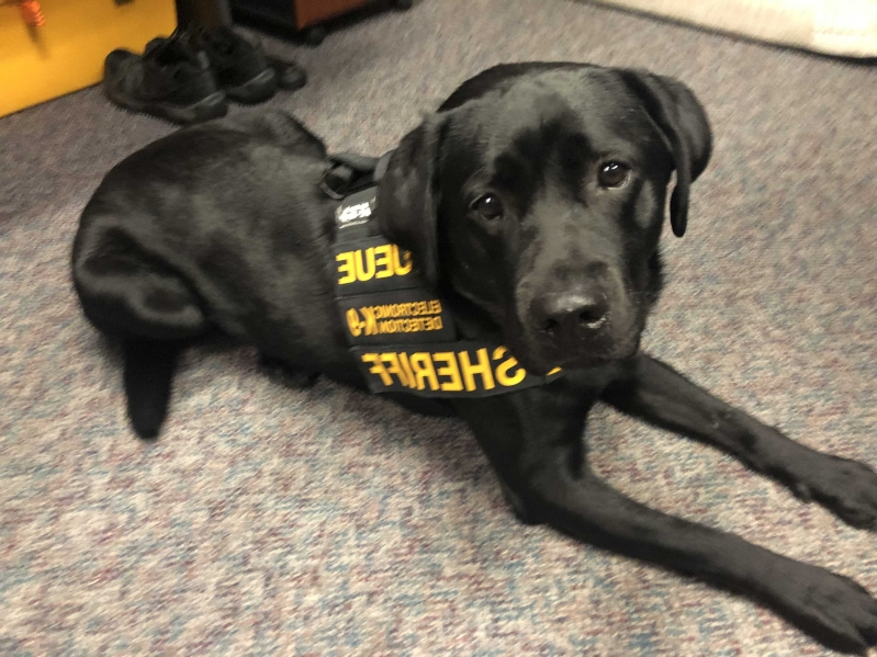 Greenville has only Electronic Detection K-9 in South Carolina
