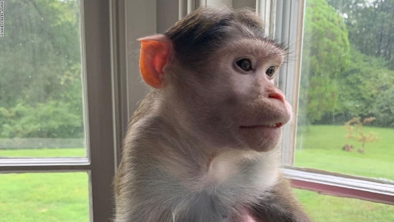 Missouri woman in legal battle to keep three emotional support monkeys