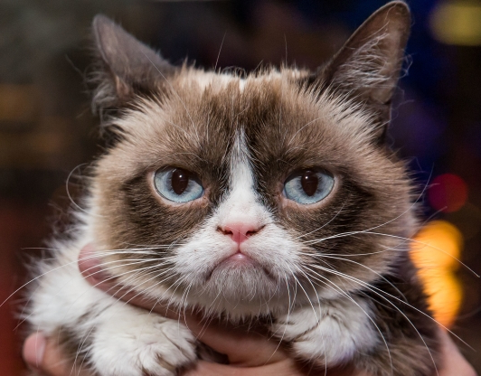 Slide 33 of 142: On May 14, the internet-famous feline known as Grumpy Cat died in the arms of her human mother, Tabatha Bundesen, after suffering complications from a urinary tract infection. The cat, whose real name was Tardar Sauce, was 7.