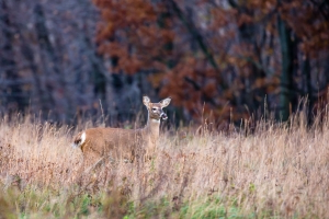 A Michigan Man Contracted Tuberculosis From a Deer—Here's What You Need to Know