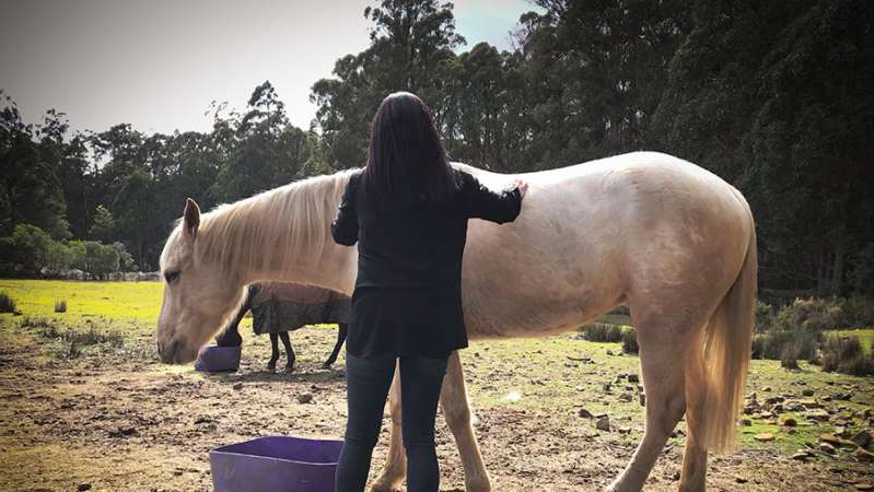a brown horse standing on top of a dirt field: 'Alicia' lives in fear of her rapist's release. (ABC News: Peter Curtis)
