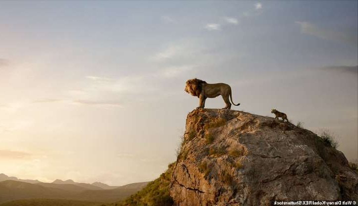 Weird News The Real Lion King Photographer Travels 2500