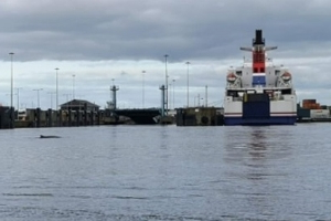 Whale spotted swimming around River Liffey