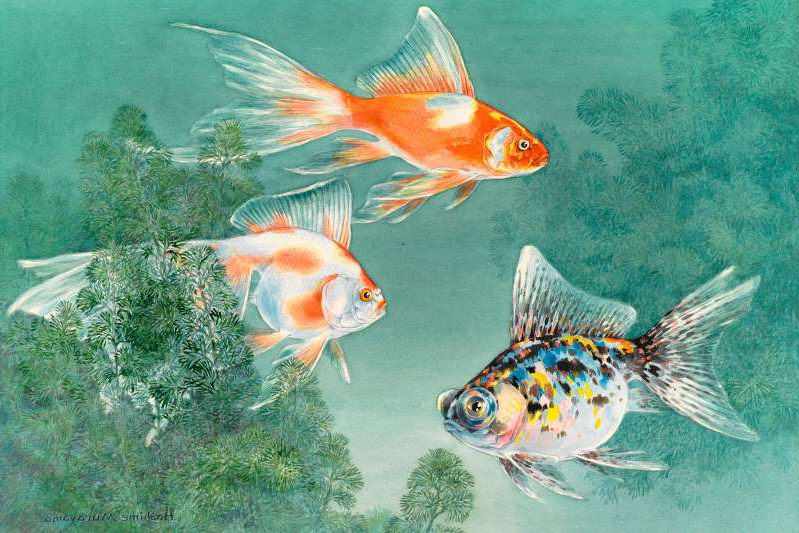 a fish swimming under water: An illustration shows three types of goldfish swimming through aquatic plants.