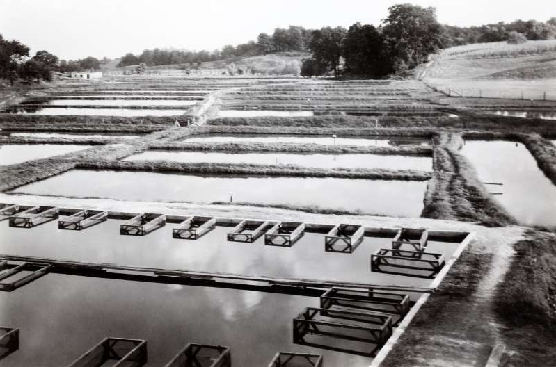 a row of park benches: Grassyfork Fisheries, pictured here, is believed to be the first goldfish hatchery in the U.S., established in 1899 in Indiana.
