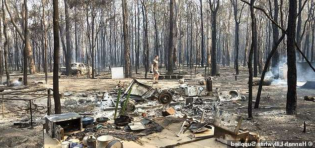 a tree in a forest: The couple lost everything on Tuesday, when an out of control bushfire ravaged the property (pictured is the caravan the couple were living in while they built their dream home on the property)