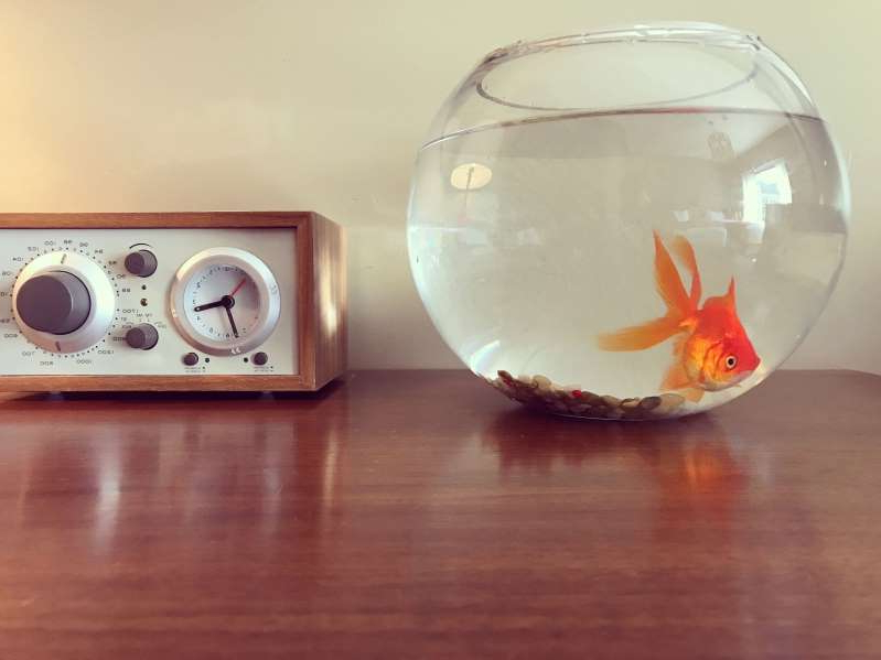 Bright orange goldfish swimming in a glass bowl next to a tiny clock radio.