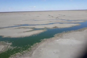 Mass fish kill spotted at Lake Pamamaroo near Menindee, sparks fears for deadly summer