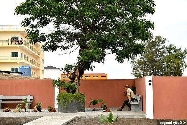 a tree in front of a building: Harry is pictured sitting beneath the Diana Tree in Huambo, which marks the spot where she was photographed in 1997
