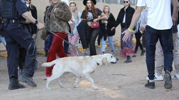 a group of people standing next to a dog on a leash: A police sniffer dog checks revellers at this year's Splendour in the Grass festival.