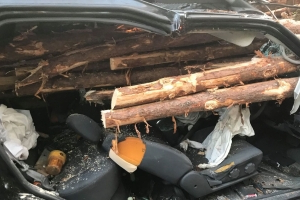 Driver miraculously survives his car being impaled by logs