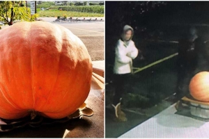 A BC Town Is On The Hunt For A Pair Of 100-Pound Pumpkin Thieves